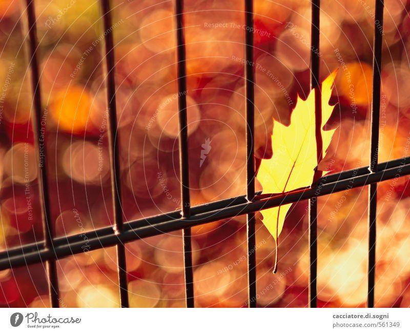 Herbst - reine Ansichtssache Umwelt Schönes Wetter Blatt Zaun außergewöhnlich bedrohlich heiß verrückt Spitze gelb gold orange rot Warmherzigkeit Überraschung