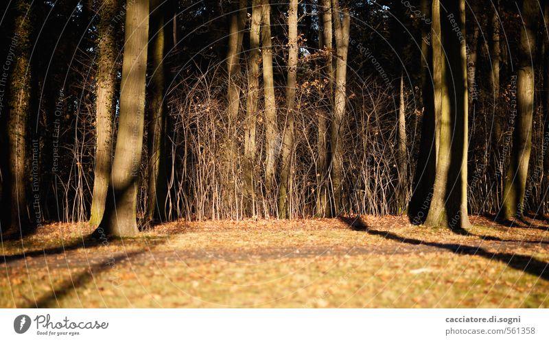 Lichtgrenze Natur Pflanze Herbst Schönes Wetter Baum Gras Wald außergewöhnlich dunkel fantastisch braun orange schwarz Gefühle Mut Verschwiegenheit Enttäuschung