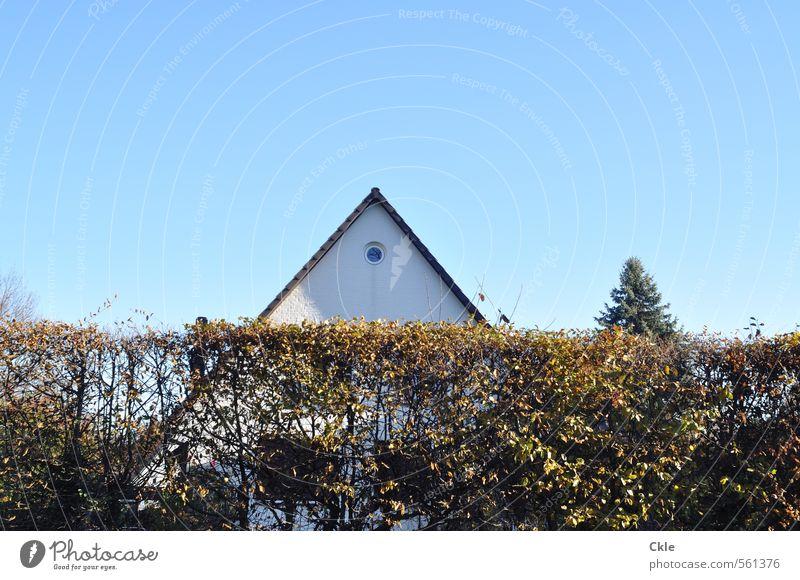 Emporkömmlinge Himmel blau Baum Haus gelb Fenster Wand Herbst Architektur Mauer grau Garten braun Fassade Wohnung gold