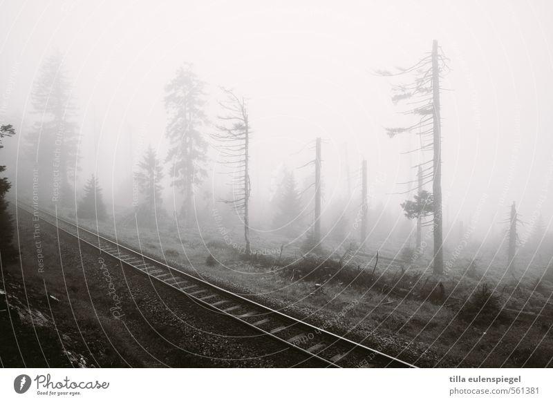 ghost Umwelt Natur Herbst Winter schlechtes Wetter Nebel Baum Wald Hügel Bahnfahren Schienenverkehr Eisenbahn Gleise Schienennetz bedrohlich dunkel kalt schwarz