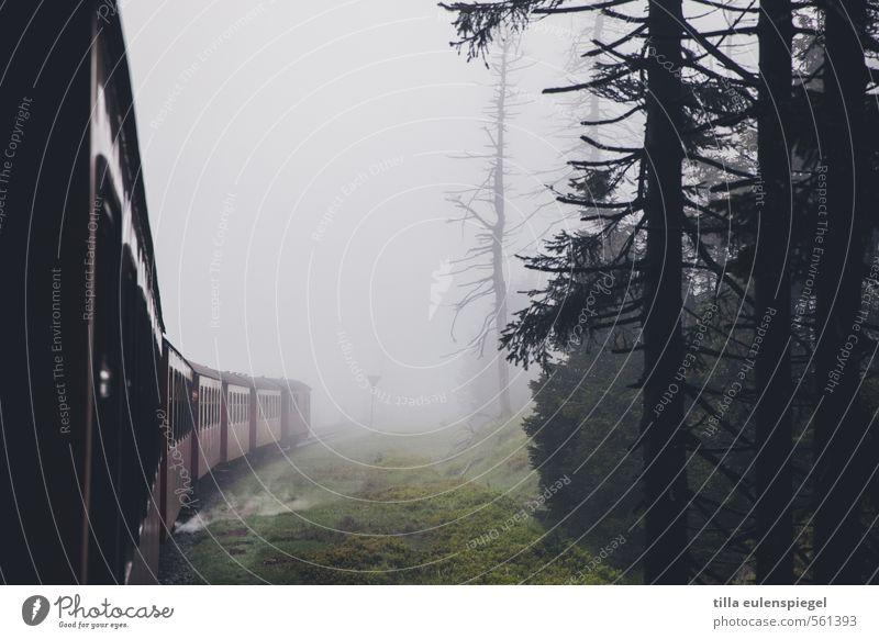 ghosttrain schlechtes Wetter Nebel Baum Wald Personenverkehr Bahnfahren Schienenverkehr Eisenbahn Eisenbahnwaggon dunkel Originalität Verkehr