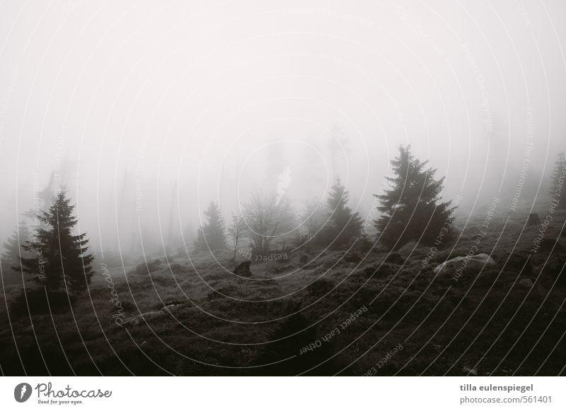 still Natur schlechtes Wetter Nebel Baum Wald dunkel natürlich schwarz Einsamkeit Wolkenwand Berghang Tanne Nadelbaum Stein Wiese Sträucher Traurigkeit