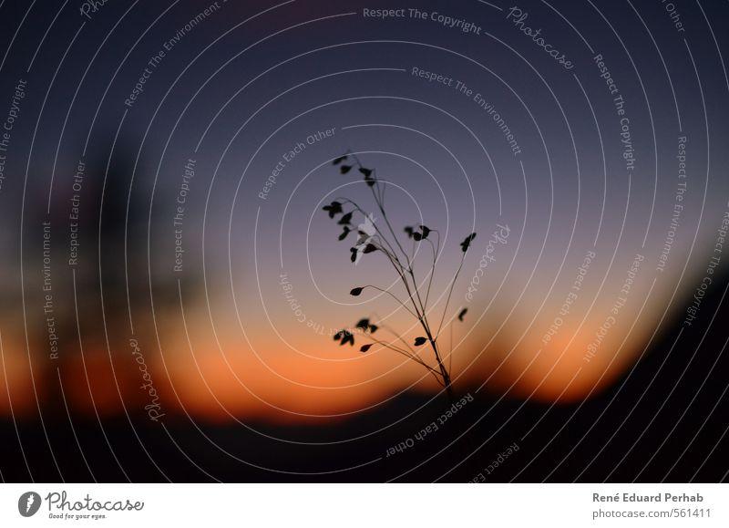 Silhouette im Abendrot... Himmel Natur blau weiß Pflanze Sommer Landschaft schwarz Umwelt Berge u. Gebirge grau Glück Luft Wetter orange