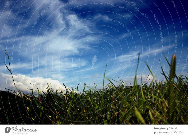 himmel und gras Himmel Wolken Wiese Gras Landschaft Länder