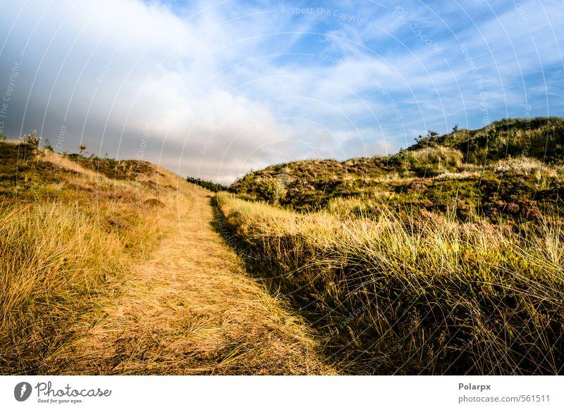 Auf dem Land schön Sommer Umwelt Natur Landschaft Luft Himmel Wolken Horizont Herbst Wetter Blatt Park Wald Straße Wege & Pfade wild gelb grün Farbe vertikal