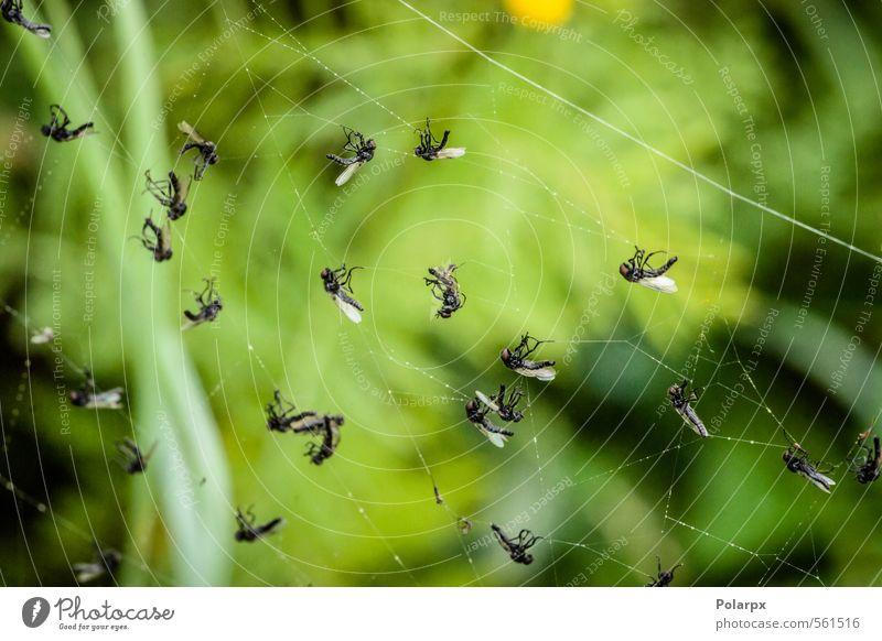 Tote Fliegen Jagd Natur Tier Wald Urwald Spinne natürlich wild grün einfangen Insekt Lebensmittel Beute Tierwelt Falle Netz Spinnennetz Opfer umhüllen Fauna