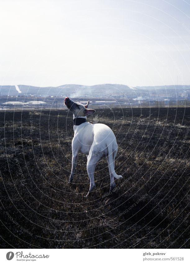 Hund Natur schön weiß Pflanze Landschaft Tier schwarz feminin Gras Horizont wild Geschwindigkeit Feuer dünn Haustier