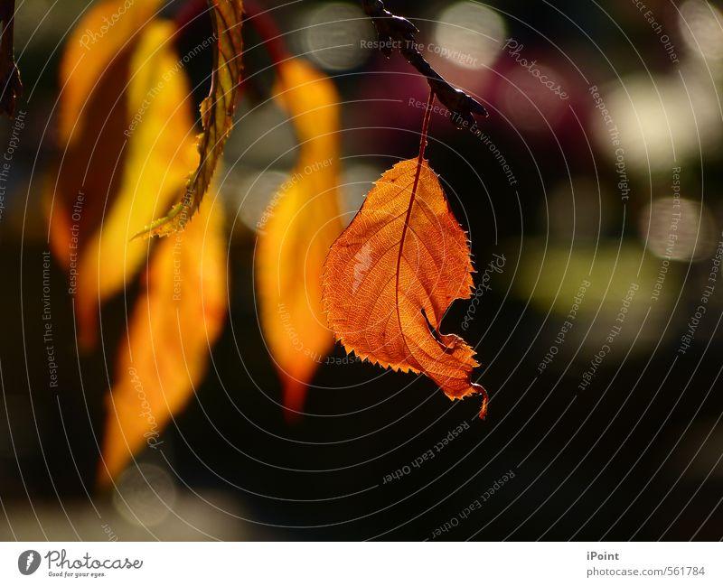 kost.bar ~ der Zauber des Herbstes beginnt ~ Freizeit & Hobby Kunst Natur Tier Sonnenlicht Baum Blatt Zeichen ästhetisch natürlich Originalität schön braun