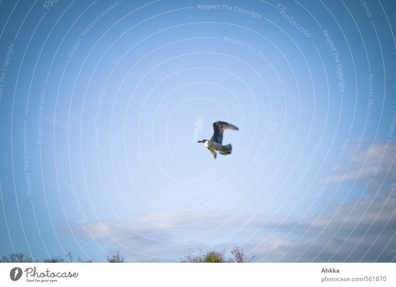 Möwe Natur Himmel Schönes Wetter Wildtier 1 Tier atmen Brunft rennen Bewegung Erholung fliegen blau Gefühle Stimmung Freude Glück Fröhlichkeit Frühlingsgefühle