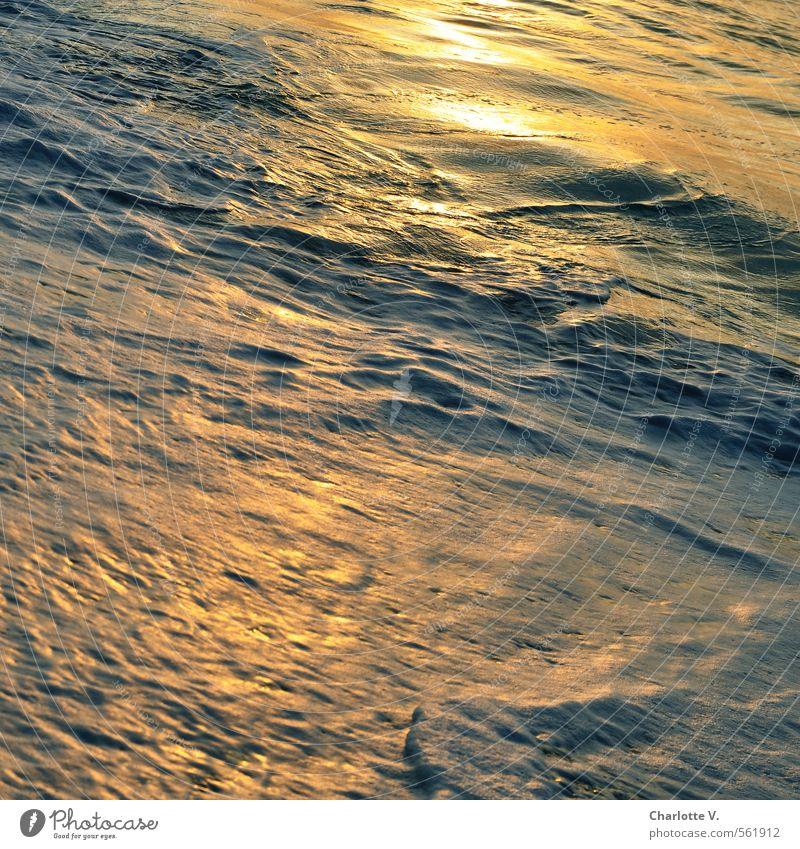 Flüssiges Gold Natur schön Wasser Sommer Meer Umwelt Bewegung grau Stimmung gold glänzend Wellen Zufriedenheit leuchten Schönes Wetter nass