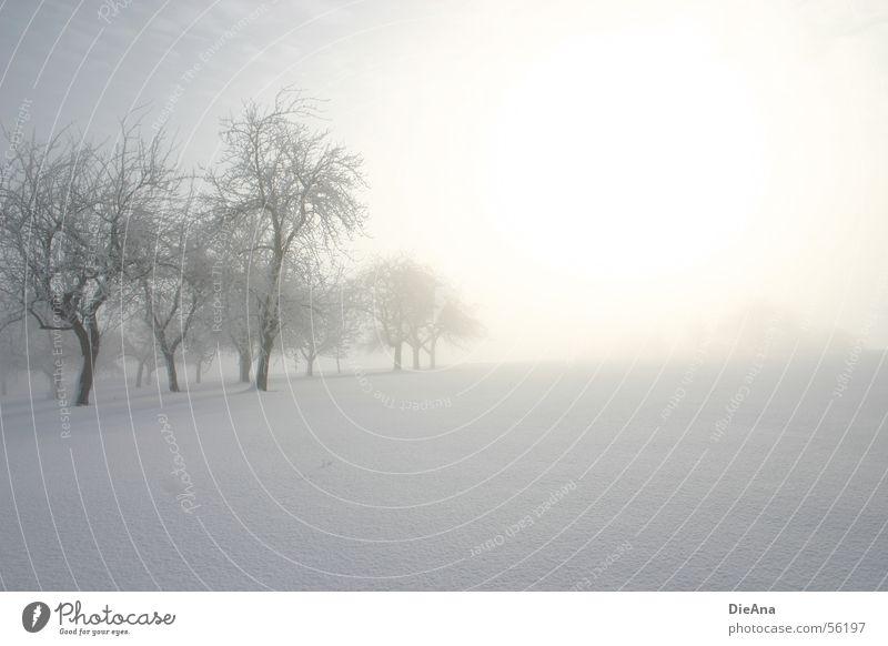 Morning has broken (1) weiß Baum Sonne Winter kalt Schnee Nebel Hoffnung März Morgen Schneedecke