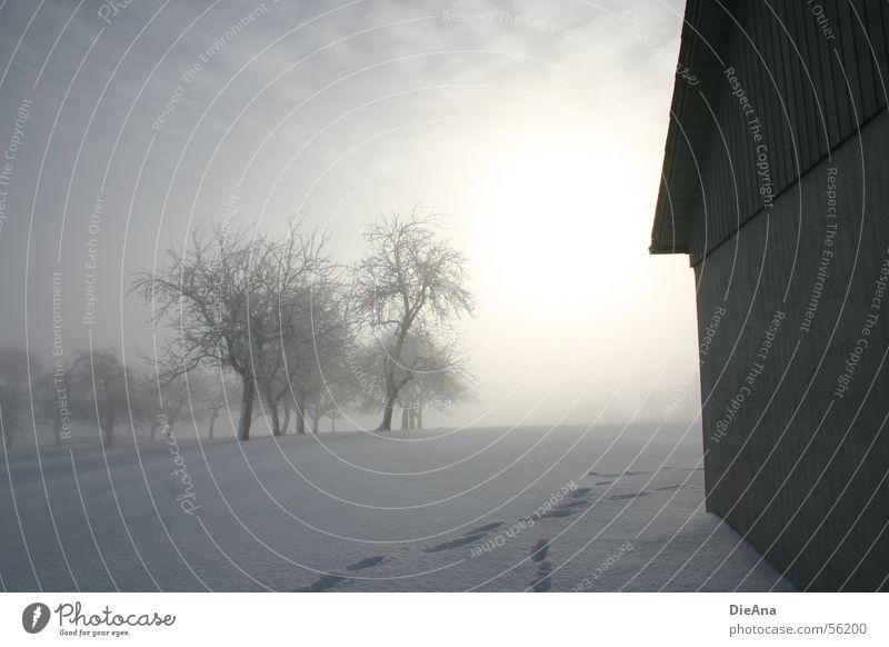Spuren im Schnee weiß Baum Sonne Winter kalt Nebel Hoffnung Hütte Fußspur März Schneedecke