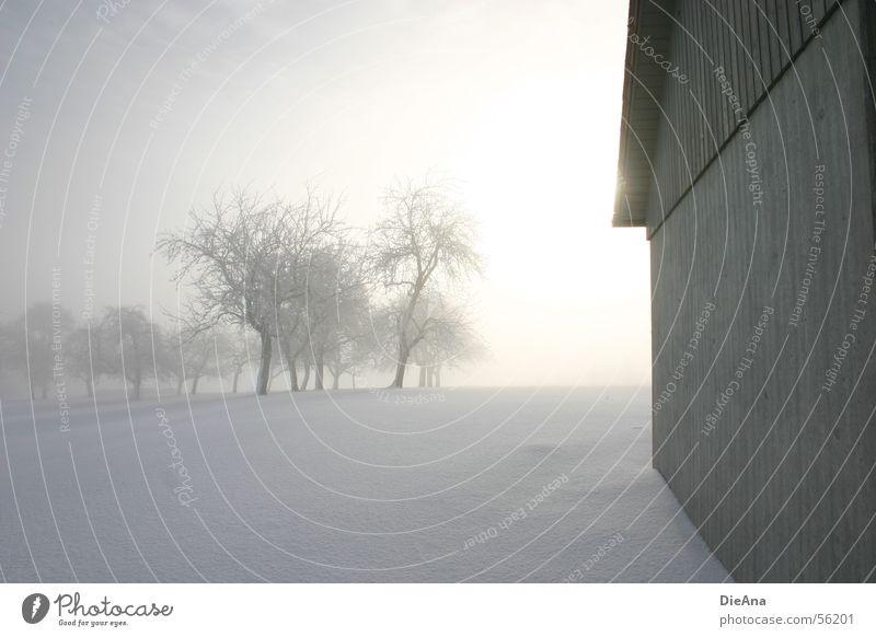 Lichtblick weiß Baum Sonne Winter kalt Schnee Nebel Hoffnung Hütte März Schneedecke