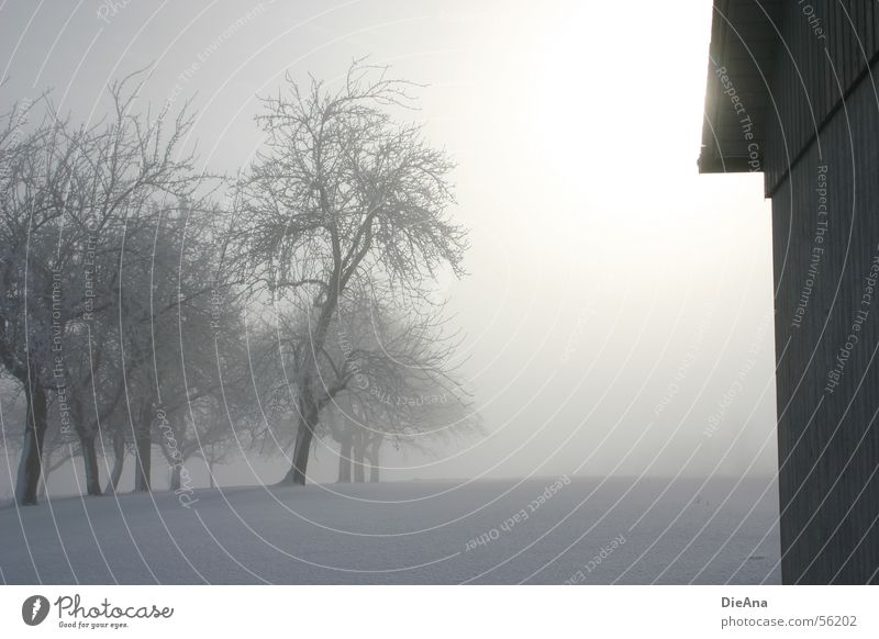 Lichtblick (2) weiß Baum Sonne Winter kalt Schnee Nebel Hoffnung Hütte Fußspur März Spuren Schneedecke