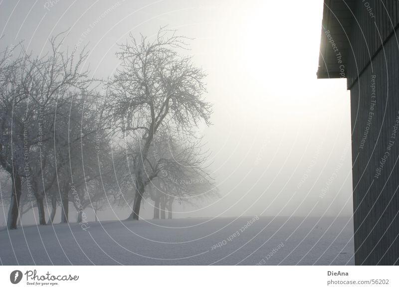 Lichtblick (2) Winter März Baum Schneedecke kalt weiß Morgen Fußspur Hoffnung Nebel Hütte Sonne fog march trees snow white cold