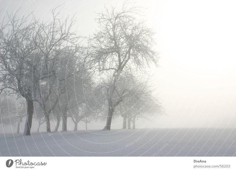 Morning has broken (2) Winter März Baum Schneedecke kalt weiß Morgen Hoffnung Nebel Hütte Sonne fog march trees snow white cold