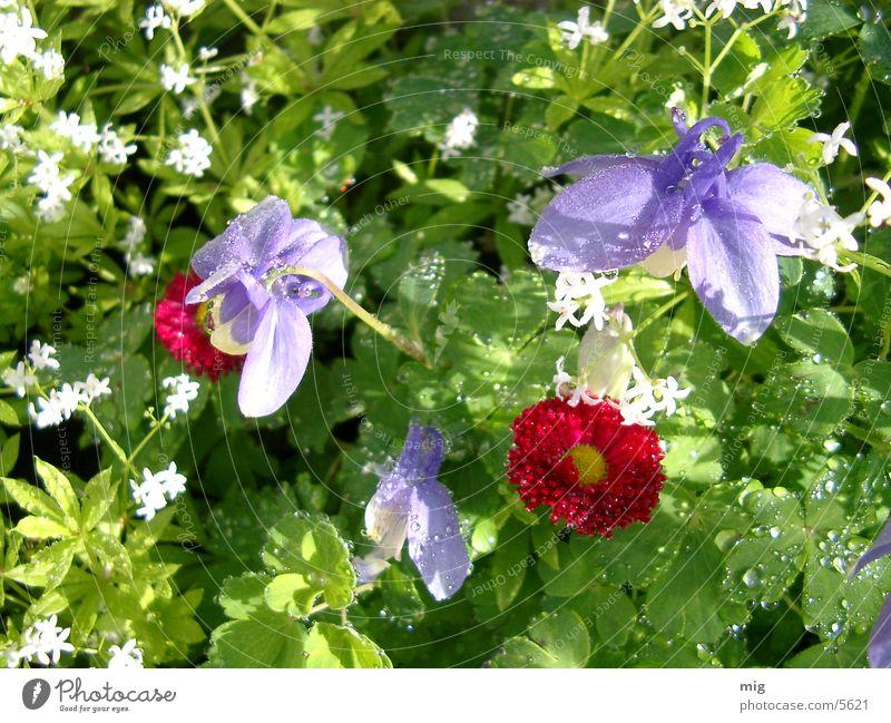 Morgen Blume Gras Wasser Wassertropfen
