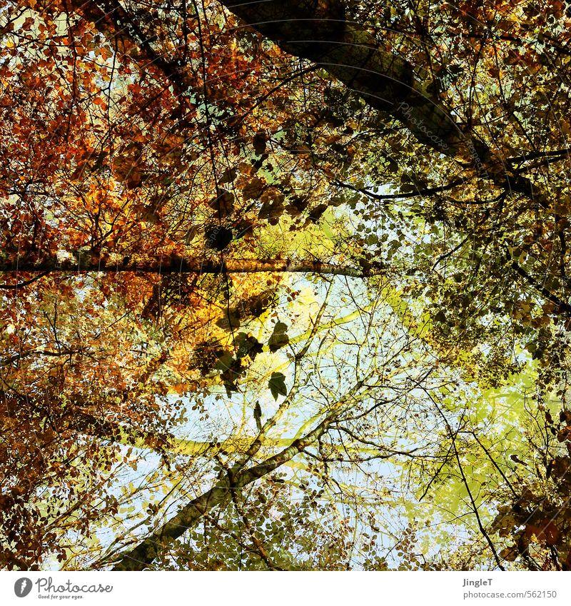 abschied Natur blau grün Baum Blatt Wald gelb Herbst braun Zufriedenheit gold wandern genießen einfach Zukunft Hoffnung