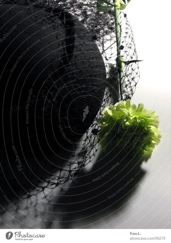 grüne Nelke schwarz gelb Blume Filz Schleier feminin ausgehen schick Hut Natur Spitze Netz Schatten Feste & Feiern Nelkengewächse
