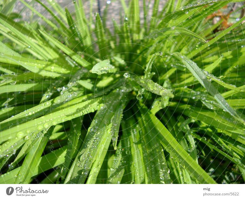 Gras Wasser