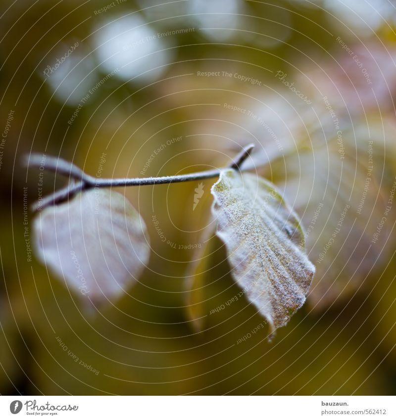 frostig. Winter Gartenarbeit Eis Frost Pflanze Baum Sträucher Blatt Holz Linie beobachten frieren kalt braun gelb grün ästhetisch Klima Stimmung Umwelt Farbfoto