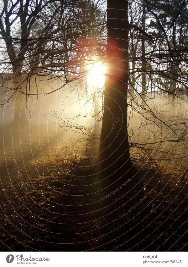 wald im nebel Wald Baum Nebel Herbst Gras Feld Sommer Kornfeld Ähren Sonne Morgen Sonnenaufgang ruhig Sonnenstrahlen Einsamkeit Stimmung Fußweg Licht Hoffnung