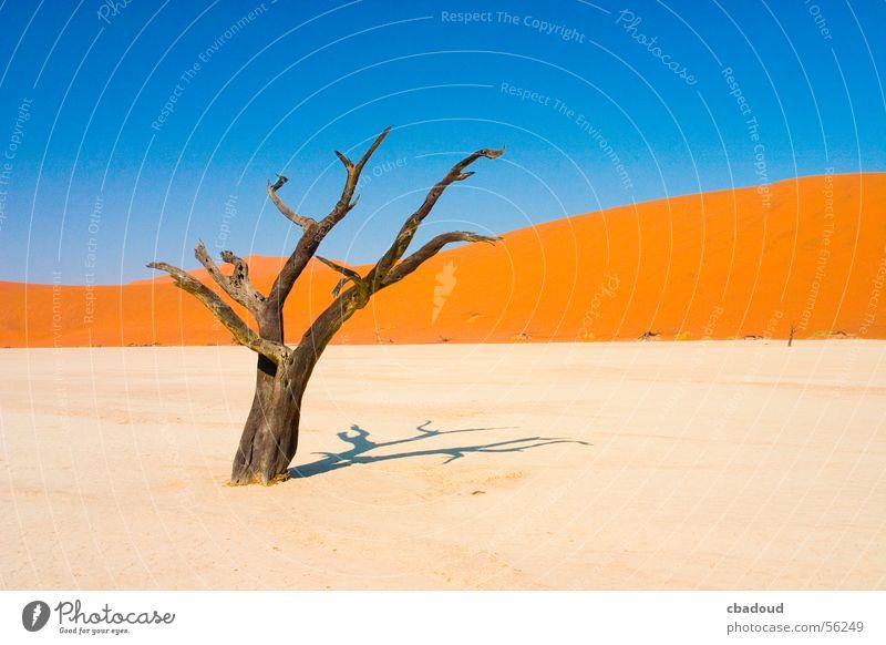 Tote Akazie in der Wüste Landschaft Sand Himmel Wolkenloser Himmel Wärme Baum Gelassenheit Tod Einsamkeit Namibia laublos Farbfoto mehrfarbig Außenaufnahme