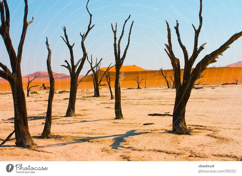 Tote Akazie in der Wüste Baum Einsamkeit Tod Wüste Namibia laublos Akazie