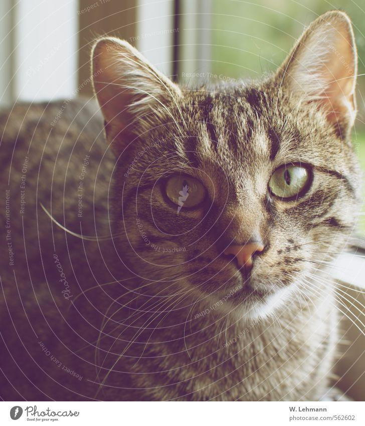 Hallo :) Pelz Tier Haustier Katze Hauskatze 1 Vertrauen Farbfoto Innenaufnahme Menschenleer Tag Porträt Tierporträt Blick Blick in die Kamera