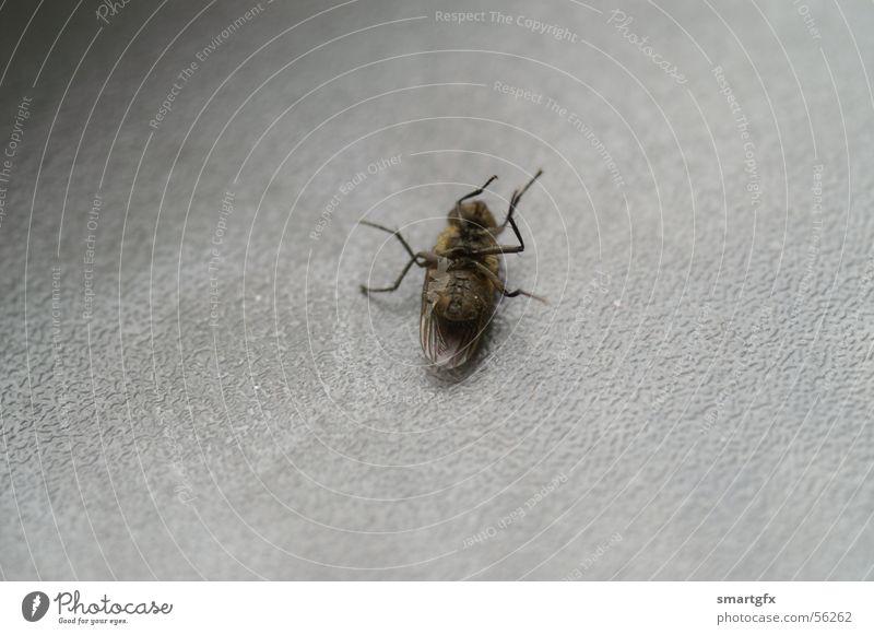 Eintagsfliege kalt Tod grau Fliege Insekt
