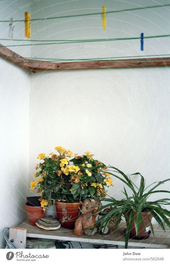 Heimwerker und ewige Sammler Pflanze Grünpflanze Topfpflanze Vergänglichkeit Wachstum Wandel & Veränderung Wäscheleine Wäscheklammern Blumentopf Begonien