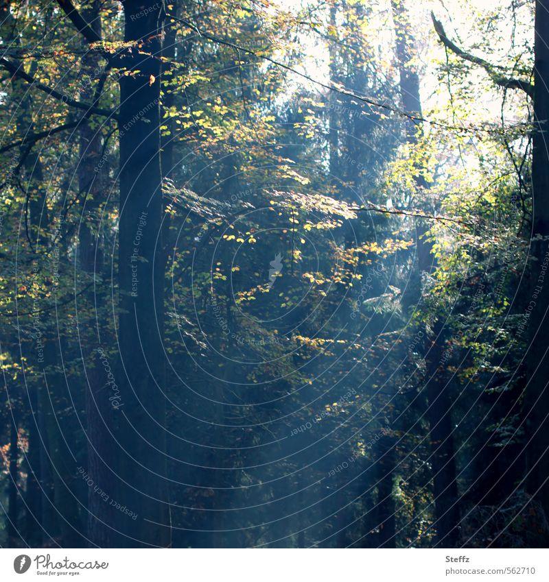 Licht, das durch die Blätter fällt.. Natur grün Baum Landschaft Blatt ruhig Wald Herbst Stimmung Baumstamm Lichtschein Herbstbeginn Lichteinfall lichtvoll