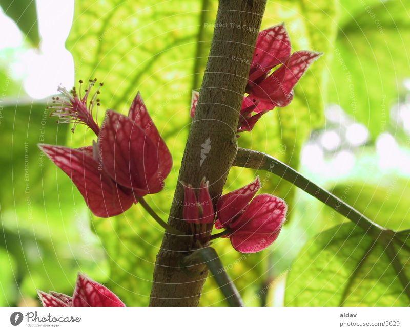 flower Natur holand