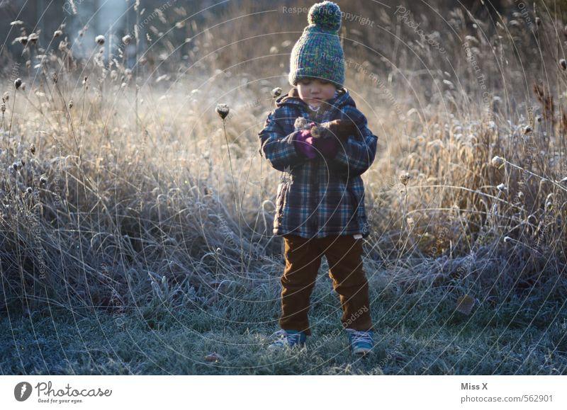 Raureifstrauß Mensch Kind Blume Winter kalt Wiese Schnee Gefühle feminin Gras Stimmung Schneefall Eis maskulin Kindheit Frost