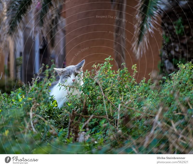 Gatto di strada 2 Katze Stadt Blatt Tier Gebäude Fassade Park Angst sitzen Sträucher warten Platz beobachten Neugier Hoffnung Wachsamkeit