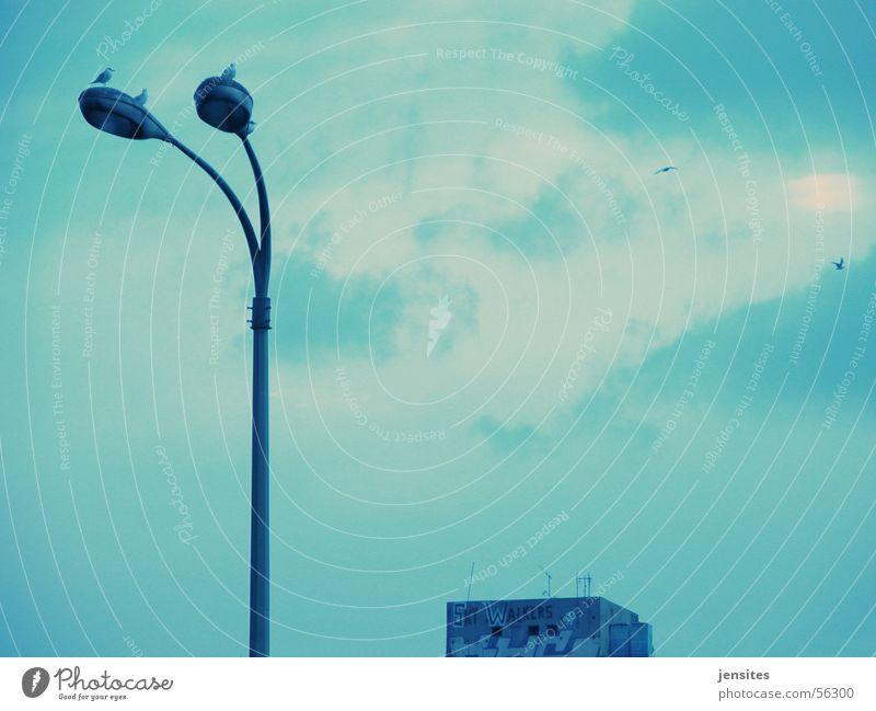 Sky Walkers Wolken Laterne Lampe Vogel Haus Himmel grau dunkel Endzeitstimmung Stadt blau Graffiti Luftverkehr fliegen bird birds building sky clouds blue grey