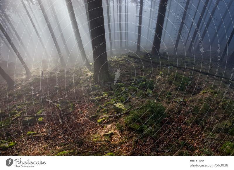 Nebelwaldlicht Natur Ferien & Urlaub & Reisen Pflanze Sonne Baum Landschaft Wolken Wald kalt Herbst Stein Wetter Nebel Wachstum hoch ästhetisch