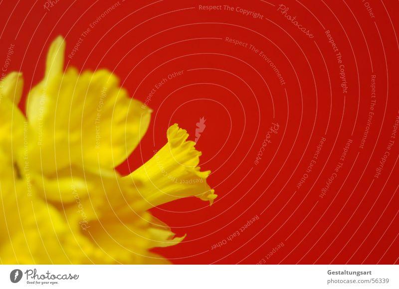 Kontrastreich Pflanze schön grün Sonne rot Blume gelb Frühling Blüte Stil Wachstum offen Blühend nah Wohnzimmer Seite