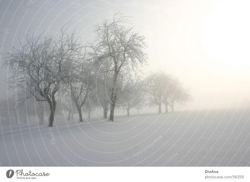 Immer noch Winter! Baum kalt Schnee Nebel Ast März Schneedecke
