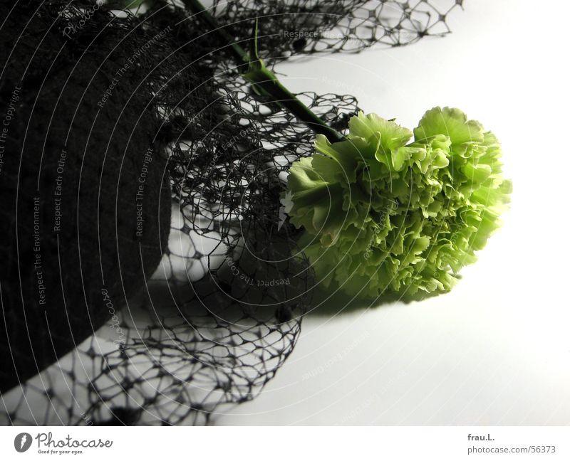 Begräbnisstimmung – die letzte Natur grün Blume gelb feminin Feste & Feiern elegant Bekleidung Kitsch Netz Spitze Hut schick Schleier ausgehen Beerdigung