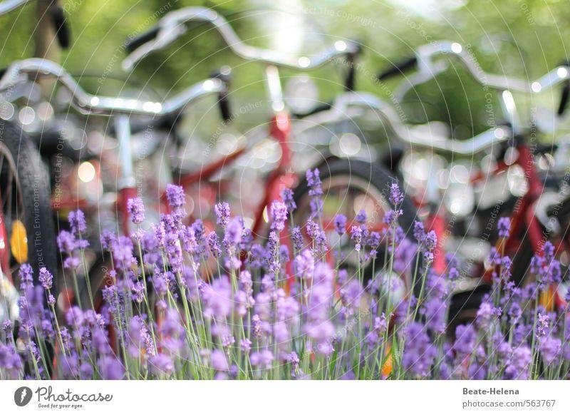 I want to ride my bicycle Natur Ferien & Urlaub & Reisen schön grün Pflanze Sommer rot Straße Bewegung Sport Gesundheit Freizeit & Hobby Fahrrad Ausflug Schönes Wetter genießen