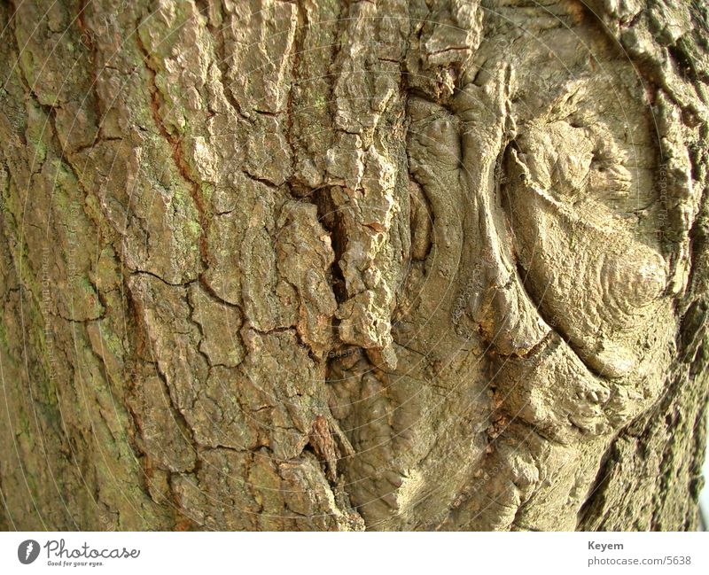 Die Baumrinde Pflanze Holz grün Strukturen & Formen Natur