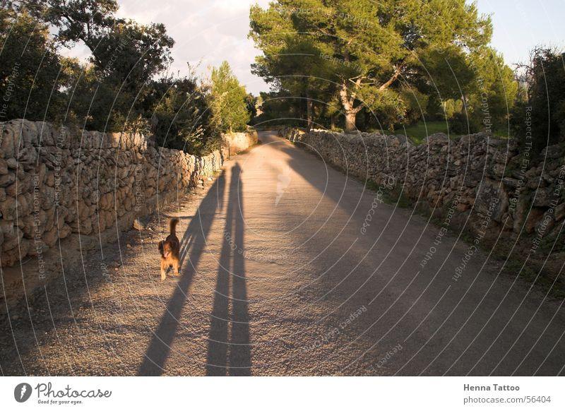 Sombras Hund Spaziergang Schatten Straße Wege & Pfade Straßenhund
