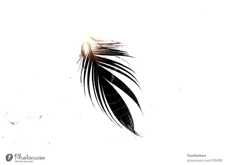 von wegen vogelgrippe Vogel Strand Meer leicht Winter Feder Sand Sonne Flügel Dänemark Beleuchtung