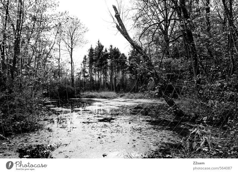 See im Wald Natur Landschaft Wasser Herbst Baum Sträucher Seeufer dunkel gruselig Einsamkeit Idylle ruhig Umwelt Moor Düsterwald Schwarzweißfoto Außenaufnahme