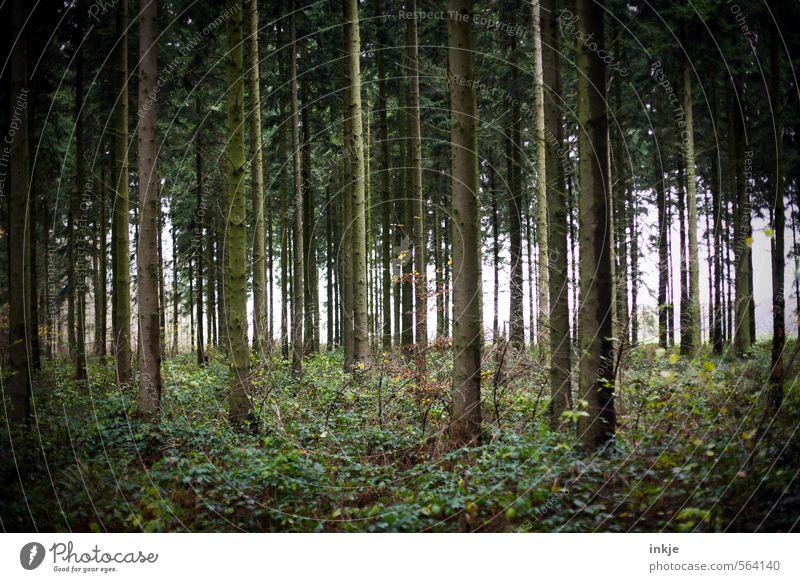 . Natur Herbst Winter Baum Gras Sträucher Waldboden Waldlichtung Nadelwald Unterholz dunkel lang natürlich schön viele braun grün Gefühle ruhig Idylle