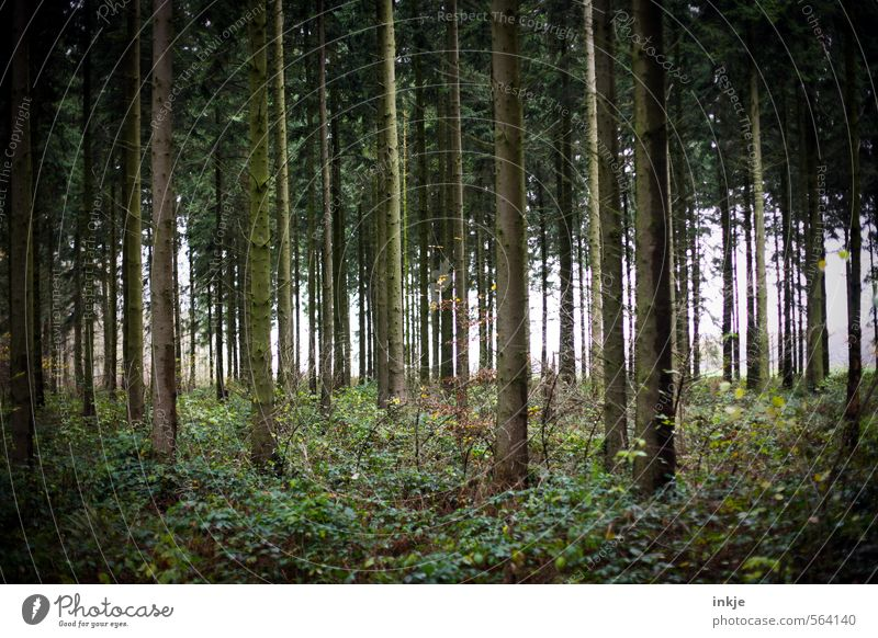 . Natur schön grün Baum ruhig Winter Wald dunkel kalt Umwelt Gefühle Herbst Gras natürlich braun Idylle