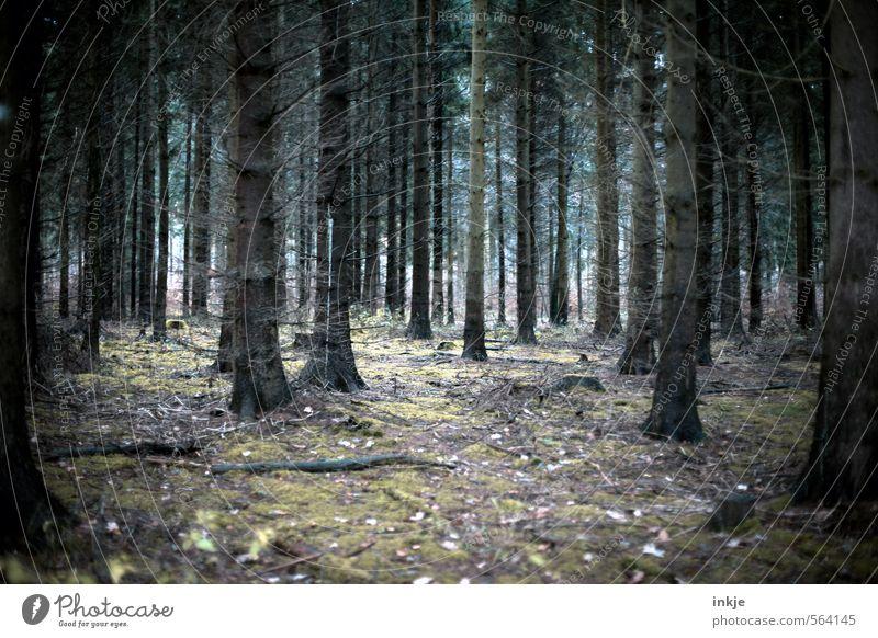 mama, it´s cold outside Natur Baum Landschaft Winter Wald dunkel kalt Umwelt Gefühle Herbst Stimmung Angst stehen Wachstum bedrohlich Wandel & Veränderung