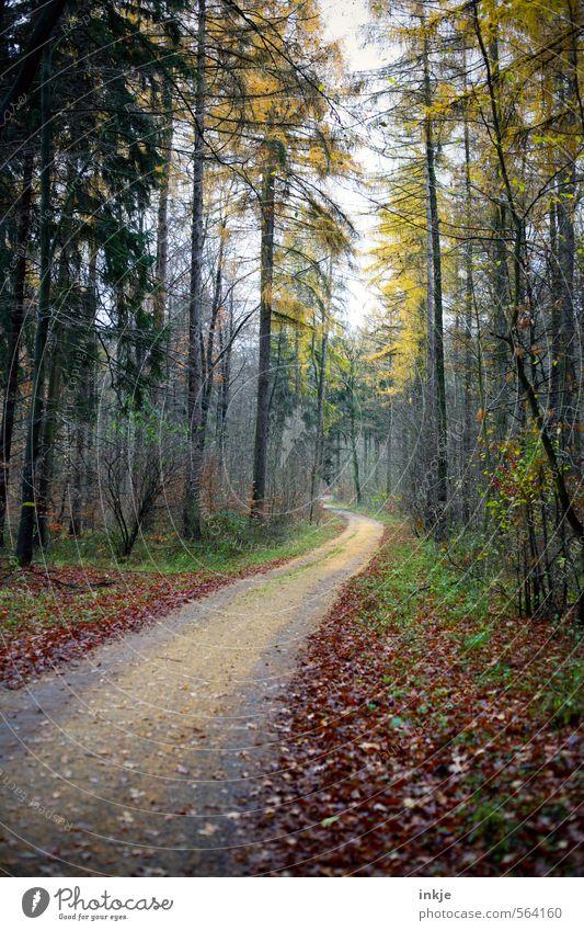 . Ausflug Ferne wandern Umwelt Natur Tier Herbst Winter Schönes Wetter Nebel Laubbaum Blatt Baum Wald Fußweg Spazierweg Mischwald Wege & Pfade Forstweg