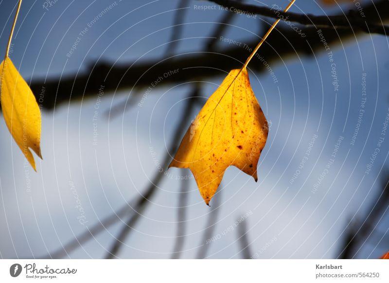 !Trash! 2013 | Leuchten statt Knallen ruhig Natur Sonnenlicht Herbst Winter Klima Klimawandel Schönes Wetter Baum Blatt Garten Park Wald hell Erholung Hoffnung